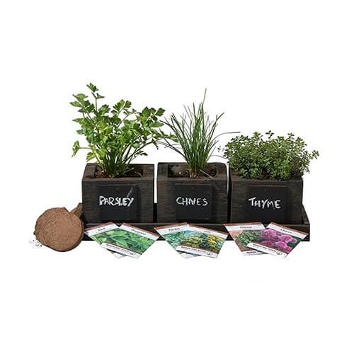 Herb-Garden-Indoor-Kit