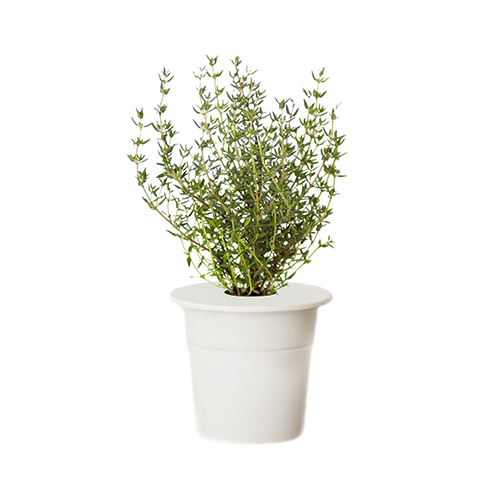 Click-Grow-Smart-Herb-Garden-Thyme-Refill-Cartridge